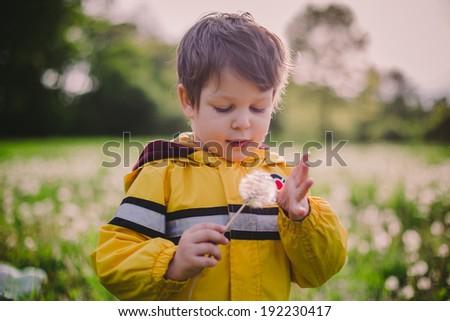 Little boy in dandelion field in spring - stock photo