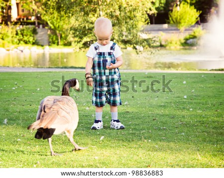 Little boy in park feeding a goose. Hair loss due to chemo therapy against cancer. - stock photo
