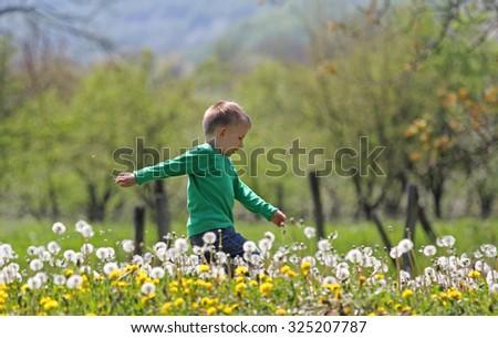 Little boy running through dandelions - stock photo