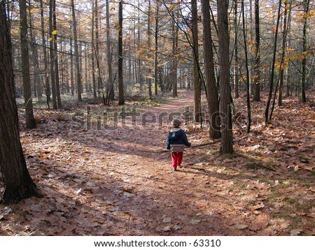 little boy walking alone in a forest on a path in autumn - stock photo
