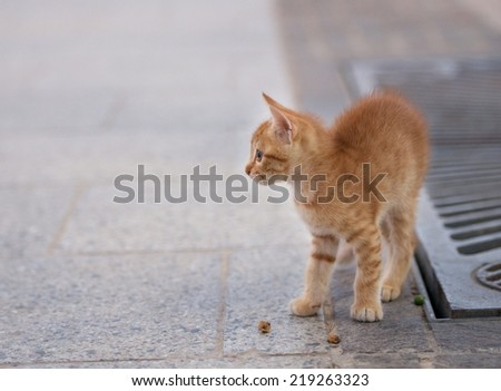 Little brown cat in the street, cat in street on sunny day,wild cat, small brown cat outside, cat isolated in the street, curious cute little cat, small kitten playing in the street - stock photo
