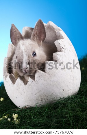 Little bunny - stock photo