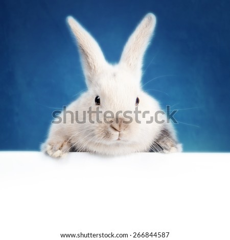 Little bunny holding an empty plate - mock up - stock photo