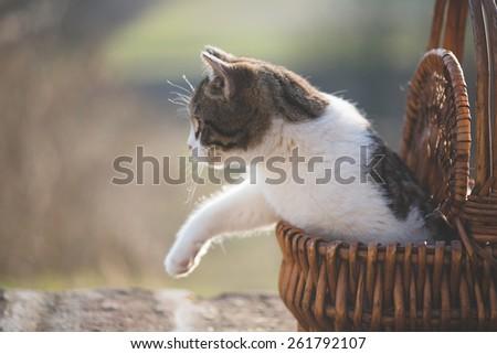 Little cat in wicker basket - stock photo