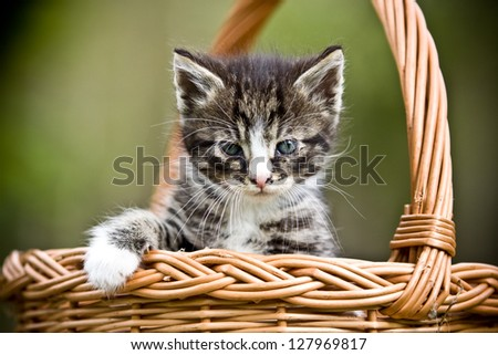 Little cat in wicker basket on green grass outdoors - stock photo