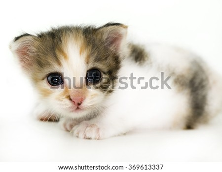Little cat isolated on white - stock photo