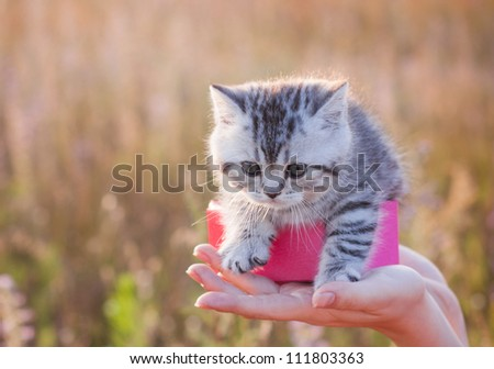 little cat outdoor - stock photo