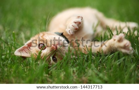 Little cat playing in grass. Selective focus, shallow DOF - stock photo