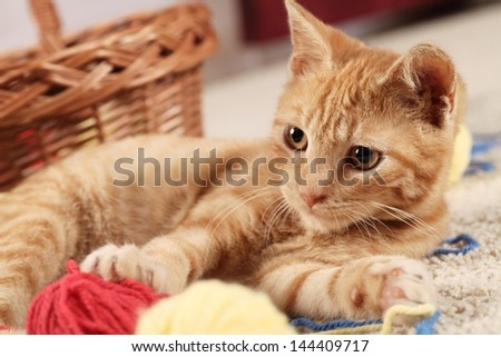 Little cat playing with wool on the carpet - stock photo