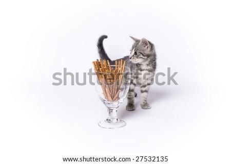 Little cat posing - stock photo
