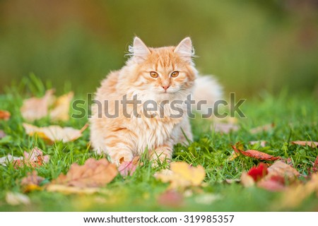 Little cat sitting in the leaves in autumn - stock photo