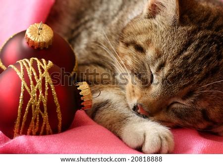 Little cat sleeping with xmas balls - stock photo
