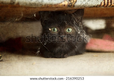 little cat under the sofa - stock photo