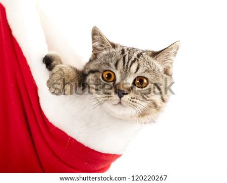 Little cat wearing Santa's hat - stock photo