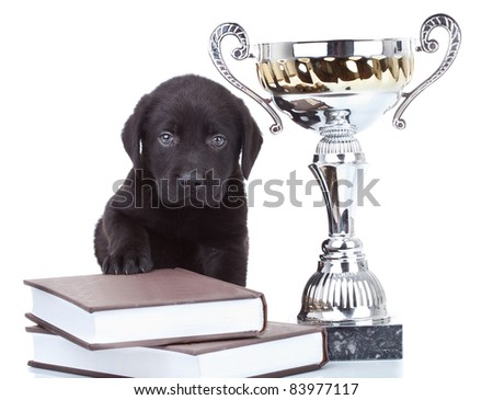 little champion - cute black labrador puppy sitting on a big pile of books, learning to be the best - stock photo