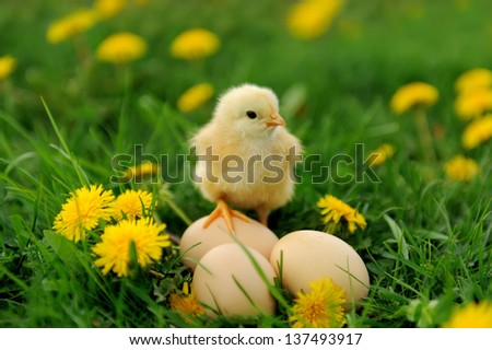 Little chicken and egg on the grass - stock photo