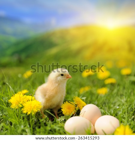 Little chicken and egg on the grass in summer day - stock photo