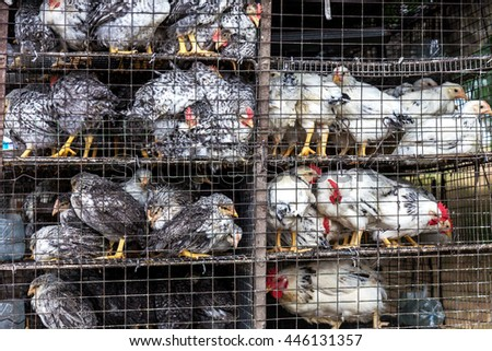 Little chicks crowd gathered in the corner of the cage. Young chickens on a poultry farm for sale in the store. Industrial poultry farming small - stock photo