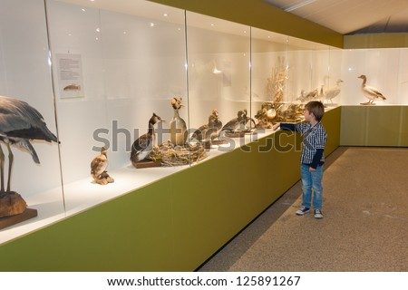 Little child in museum pointing at birds on display in a cabinet - stock photo