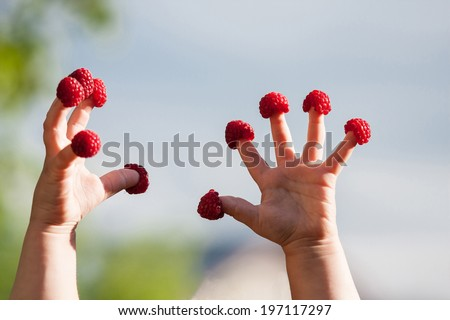 Little child's hands with raspberries on fingers - stock photo