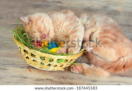 Little cream kitten sleeping on the basket with colored eggs - stock photo