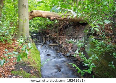 Little creek through Marlay Park Dublin Ireland - stock photo