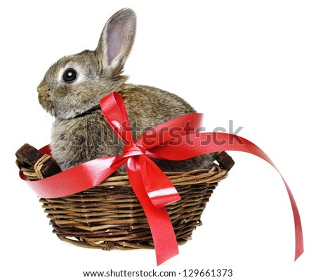 little cute baby rabbit in a basket with red ribbon - stock photo