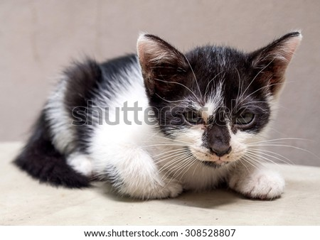 Little cute black and white kitten lay on white floor, selective focus on its eye - stock photo