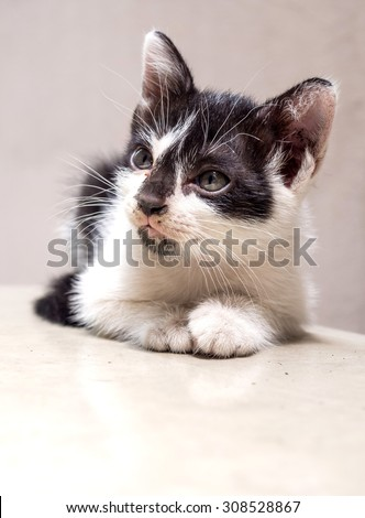 Little cute black and white kitten lay on white floor with faint reflection, selective focus on its eye - stock photo