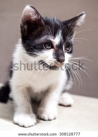 Little cute black and white kitten sit on white floor with tilt head, selective focus on its eye - stock photo