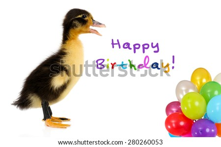 Little cute duckling with colorful balloons isolated on white - stock photo