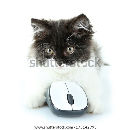 Little cute kitten and computer mouse, isolated on white - stock photo