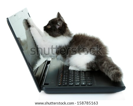 Little cute kitten and laptop, isolated on white - stock photo