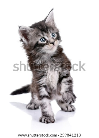 Little cute kitten plays on a white background - stock photo