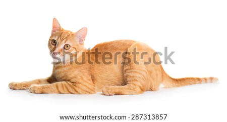 Little cute red cat isolated on white background - stock photo