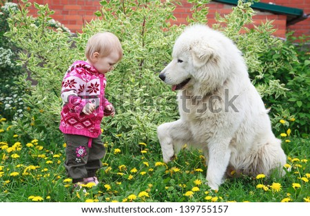 Little cute toddler girl playing with her big white shepherd dog, selective focus on face - stock photo