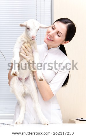 Little cute white goat on examination at the vet - stock photo