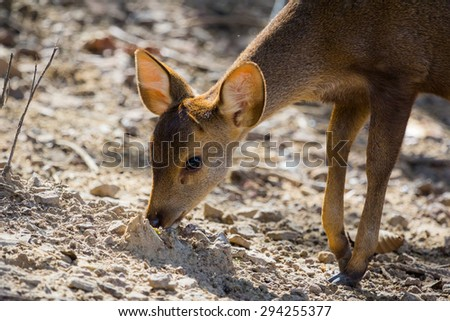 Little deer in soft morning light background - stock photo