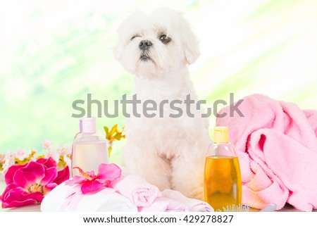 Little dog at spa waiting for grooming - stock photo