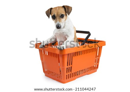 Little dog looks out of the shopping cart - stock photo
