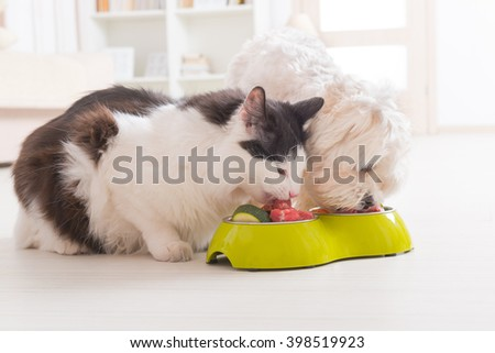 Little dog maltese and black and white cat eating natural, organic food from a bowl at home - stock photo