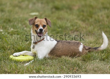 Little dog outside - stock photo