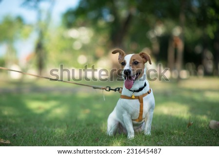 little dog sitting in grass - stock photo