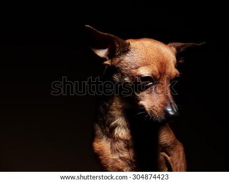 Little doggy - stock photo