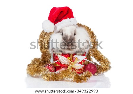 Little dwarf rabbit with a christmas present, santa's hat and christmas decoration - stock photo
