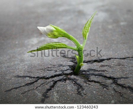 Little flower sprout  grows through urban asphalt ground - stock photo