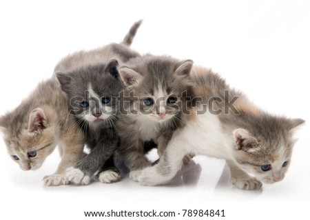 little fluffy kittens playing - stock photo