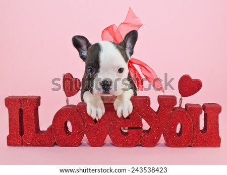 Little Frenchie puppy leaning on a sign that says I love you. - stock photo