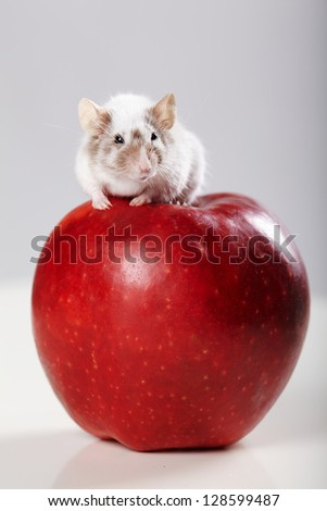 little funny mouse on big red apple - stock photo