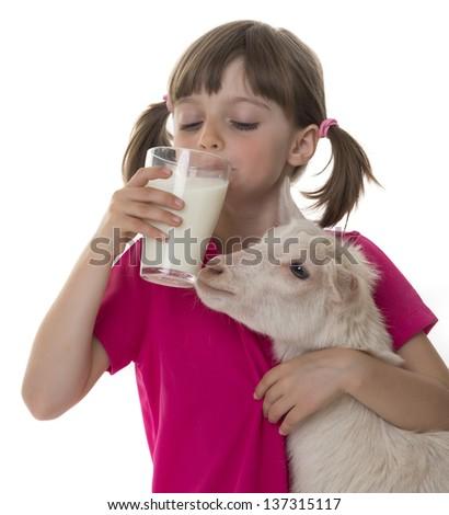 little girl drinking healthy goat milk and holding little goat - stock photo